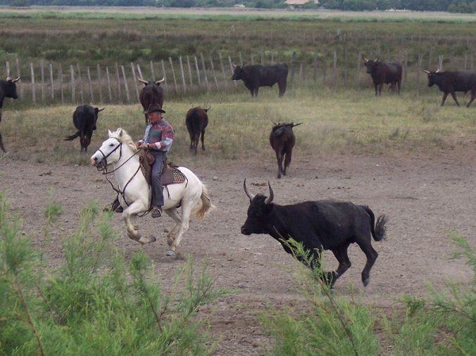 Camargue - guardian et taureaux - Photo Rosemarydukelow