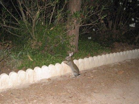El conejo suelto