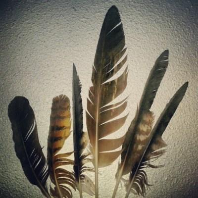 [40] colección de plumas