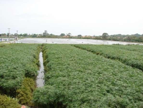 Soluciones Ecológicas para el Tratamiento de Aguas Residuales