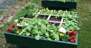 , ¿Se puede cultivar una Huerta a la Sombra?