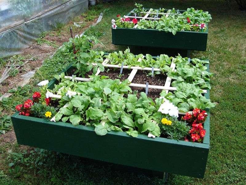 Se puede cultivar una Huerta a la Sombra?