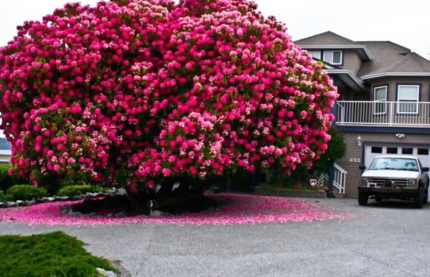 20 Árboles increíbles alrededor del mundo