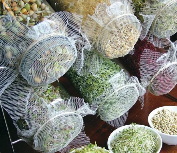 Cultiva tus propios Brotes y Germinados en Casa - El Horticultor
