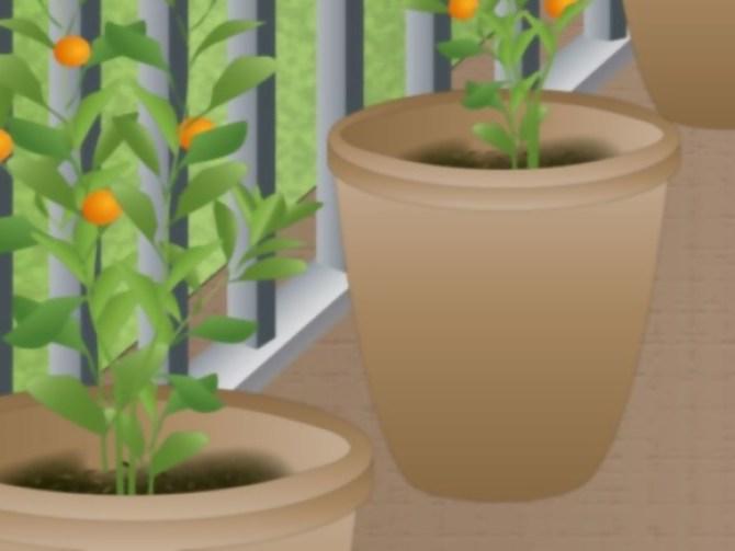 Grow Fruit in Pots Step 10.jpg