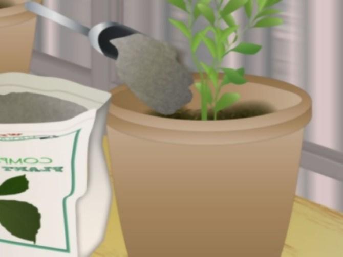 Grow Fruit in Pots Step 7.jpg