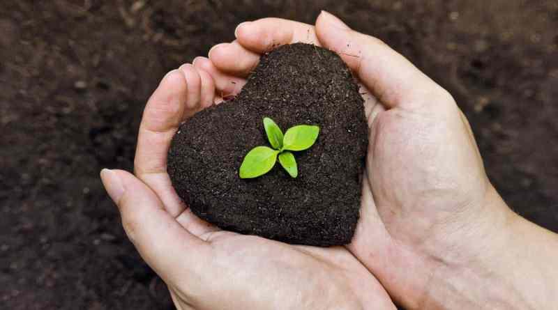 , ¿Qué es el humus de lombriz y que beneficios trae para el suelo y las plantas?