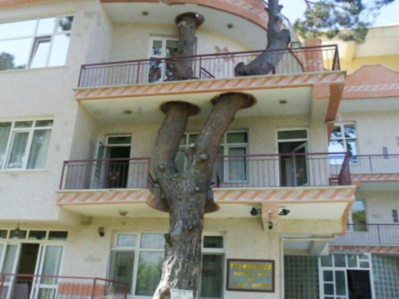 2. El árbol estaba ahí antes de que ellos empiecen a construir.