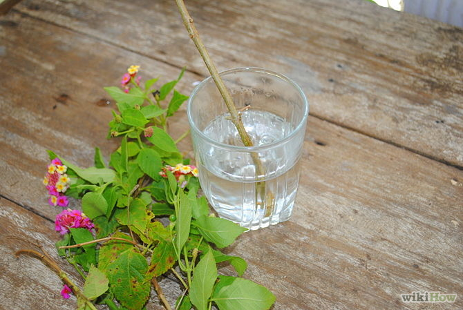 Grow Cuttings from Established Plants Step 4.jpg