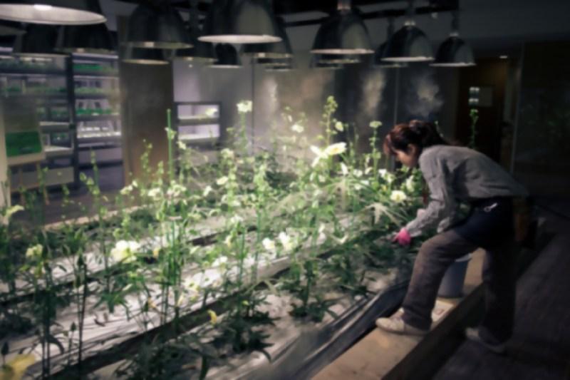 6_urban farm offices