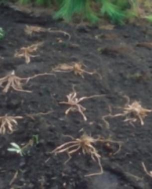 10-tips-para-la-division-de-plantas-perennes-12