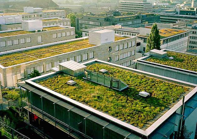 Por ley los techos en Francia deberán estar cubiertos de plantas o paneles solares