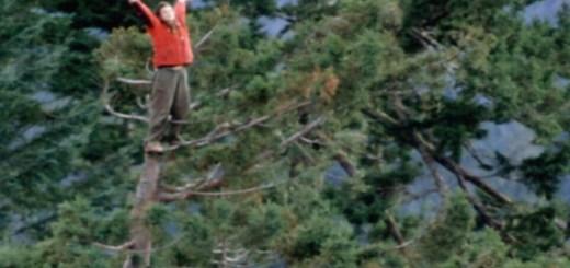 Julia a 60 metros de altura - Fuente: http://www.pollutionissues.com/A-Bo/Activism.html