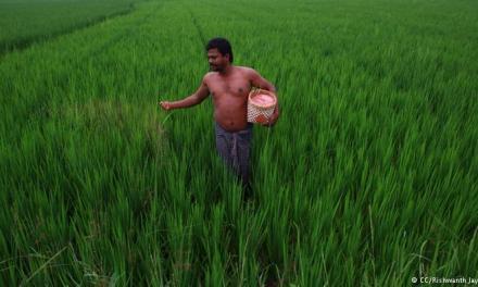 Agricultores Indios logran récord mundial de cosechas sin usar transgénicos, una auténtica revolución verde