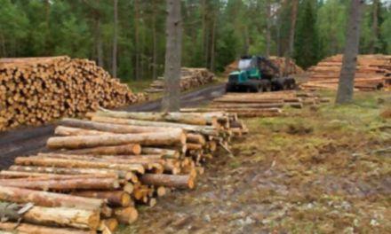 Baja la deforestación en la selva amazónica de Brasil