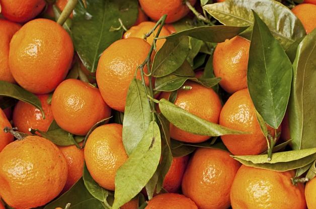 Top 10 Fruit Trees for Small Spaces: Mandarin