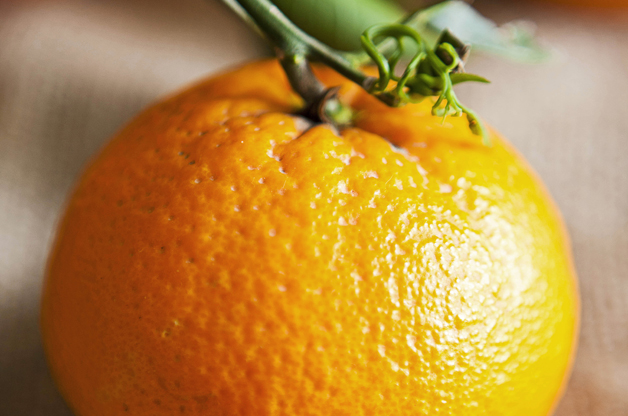 Top 10 Fruit Trees for Small Spaces: Orange