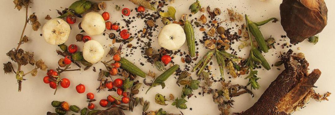 Recomendaciones para continuar el milenario arte de guardar semillas (Infográfico)