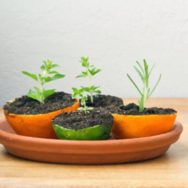 , Exóticos Semilleros o almácigos para hacer fácil en casa