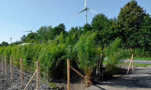 Bamboo para reducir la contaminación acústica