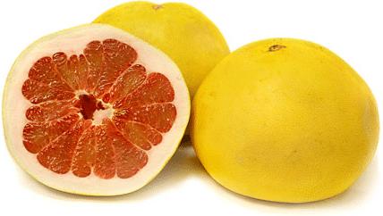 Pomelo (Citrus medica)