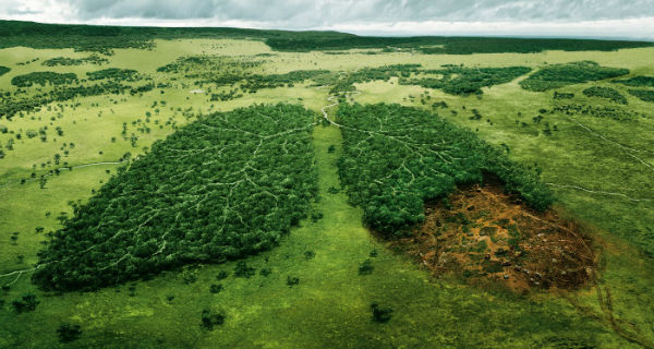Desforestacion
