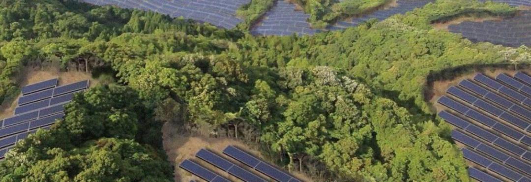 Cuando las plantas solares provocan estos efectos en la biodiversidad del planeta…