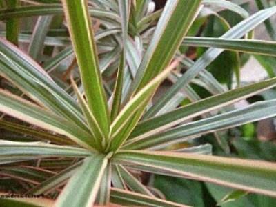 10 Plantas de Interior resistentes bien fáciles de cuidar