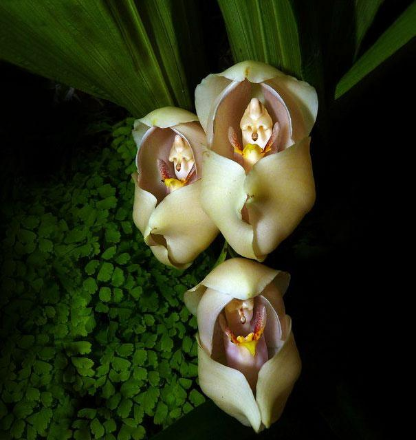 17 Flores Que Parecen Otra Cosa