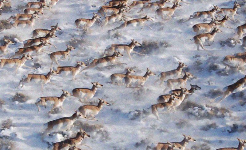 20 fotos maravillosas de animales en migración