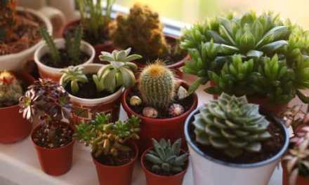 10 Especies de cactus y plantas suculentas fáciles de mantener y cultivar