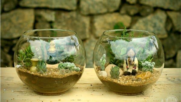 mini jardín suculenta