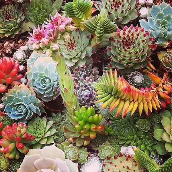 10 Especies De Cactus Y Plantas Suculentas Faciles De Mantener Y - Plantas-de-jardin-resistentes