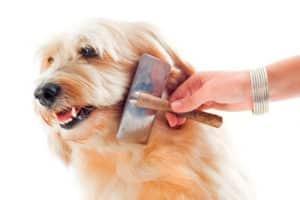 perro Control de pulgas natural con Diatomeas