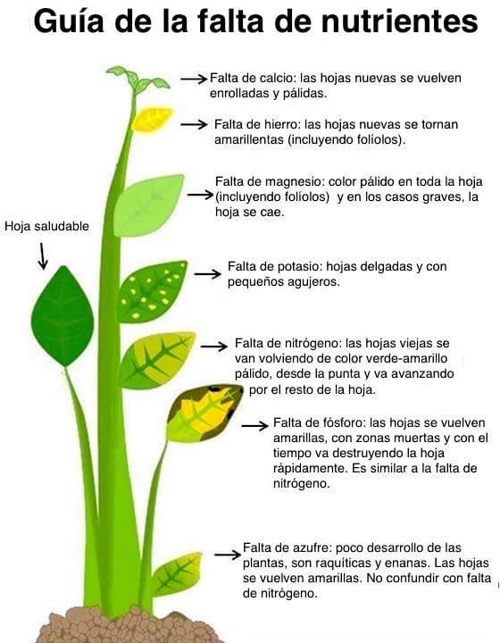 , Identifique los síntomas de la deficiencia nutricional en las plantas