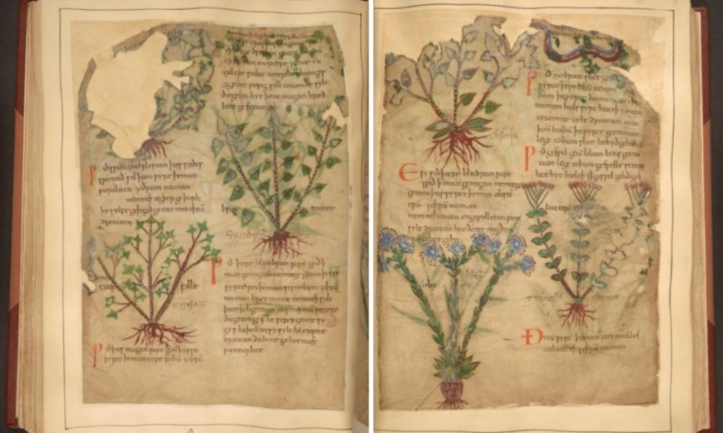 Libro de hierbas medicinales de 1000 años de antigüedad