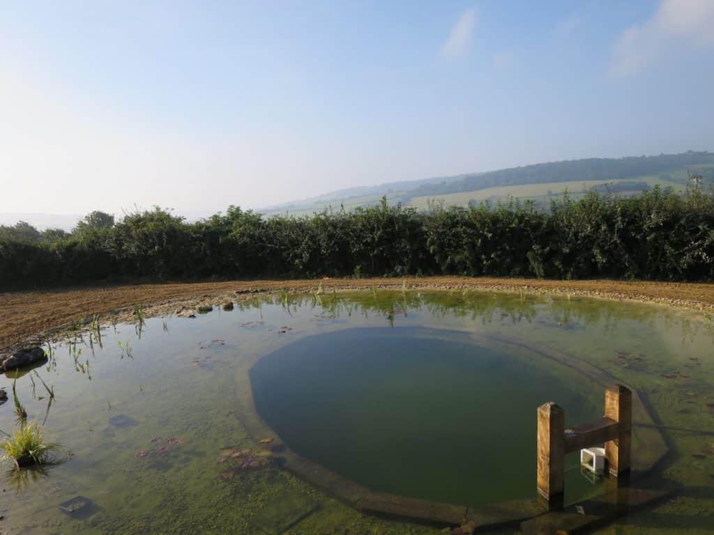 Como hacer una piscina natural o bio piscina que sustituye for Bio piscina