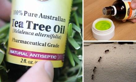 Siete usos del aceite de árbol de té que probablemente no conocías