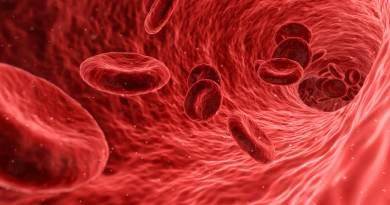 , Hierbas y Plantas para Mejorar la Circulación Sanguinea