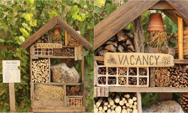 Aprenda a Construir un Hotel para Insectos