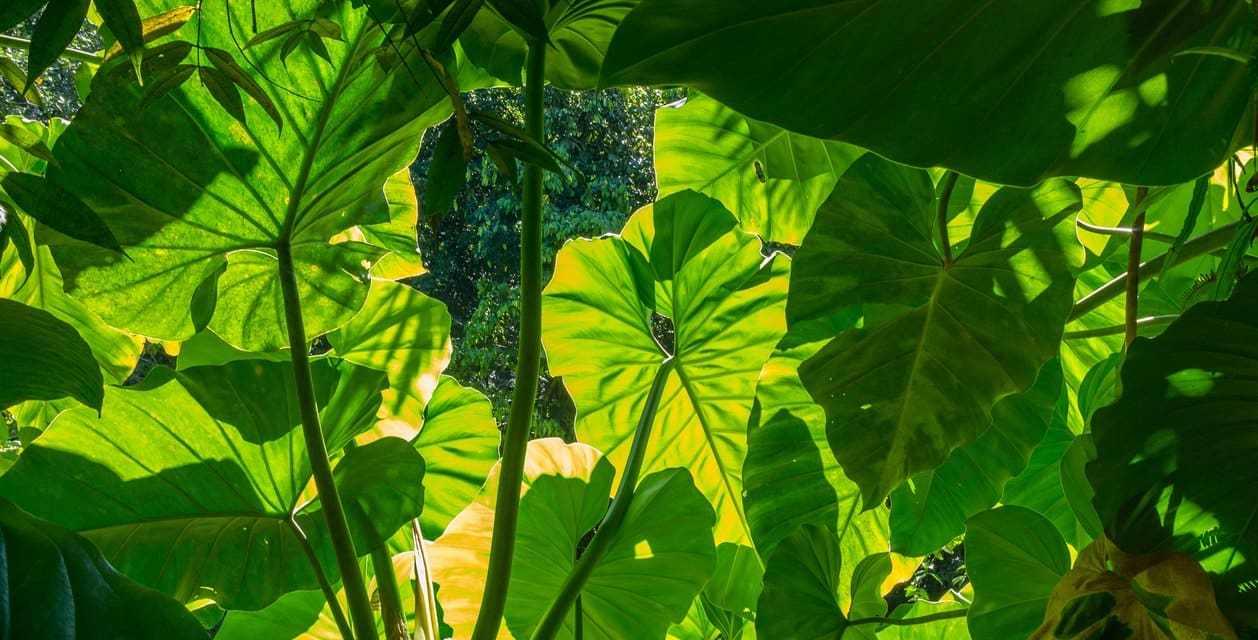 8 plantas de interior que limpian el Aire