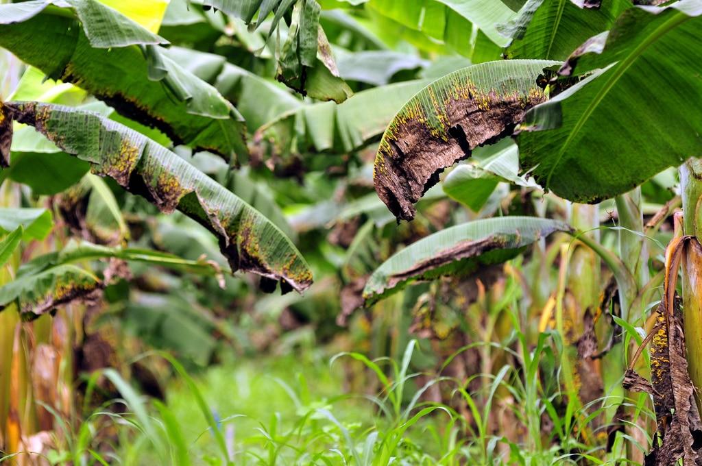 8 Fungicidas Orgánicos y Caseros para combatir ataques de hongos