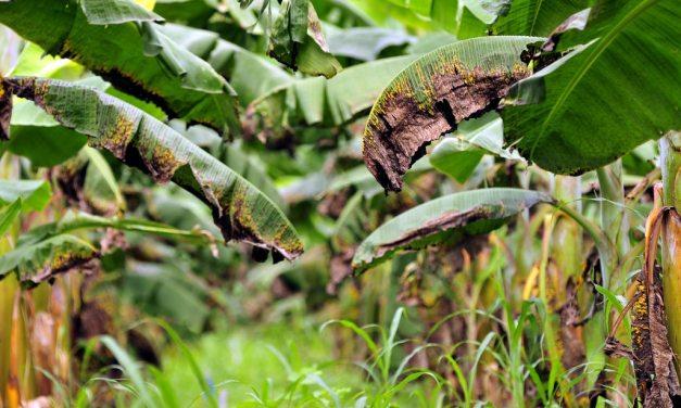 8 Fungicidas Orgánicos y Caseros para combatir ataques de hongos en tus plantas