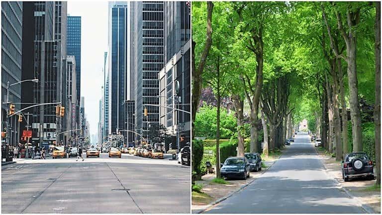 Cuántos más árboles nos rodean, menores son nuestros niveles de estrés