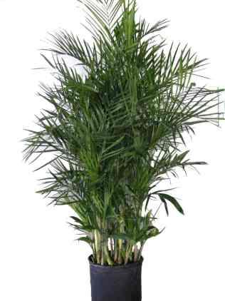 Tenga al menos una de estas plantas en su hogar: son