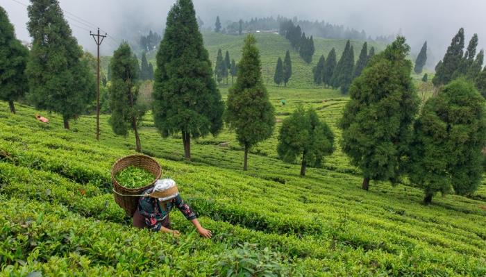 Estado en la India es el primero 100% orgánico del mundo donde los pesticidas y fertilizantes químicos están prohibidos