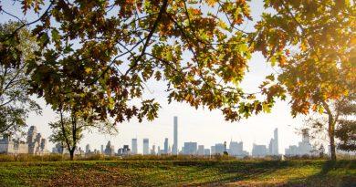 Las ciudades deben pensar en los árboles como infraestructura de salud pública