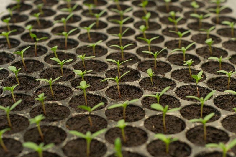 Huerta para impacientes: 11 plantas que cosecharas muy rápido