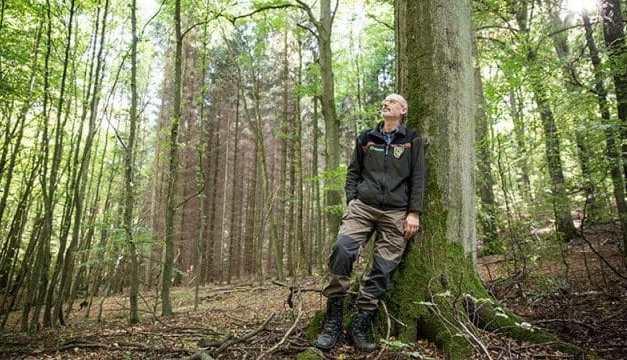 """¡Asombroso!: """"Los árboles adultos alimentan y cuidan de los pequeños"""""""