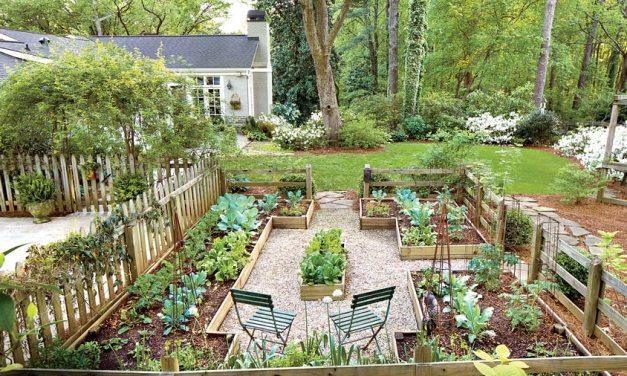 Cómo transformar tu jardín en una huerta orgánica
